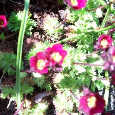 Majowe klejnoty w moim ogrodzie