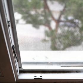 Nieproszeni jesienni goście. Jak pozbyć się biedronek, pająków i myszy?