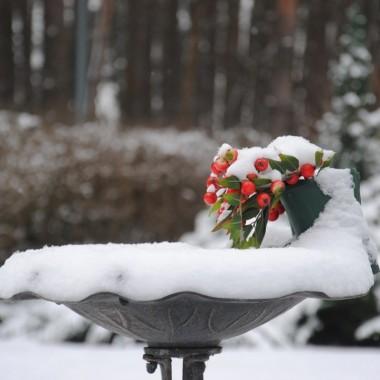 Kolory stycznia w moim lasku :)