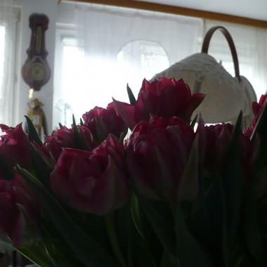 ...............i tulipany...................uwielbiam je....................