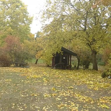 Jak zawsze u mnie jesienią dużo liści...
