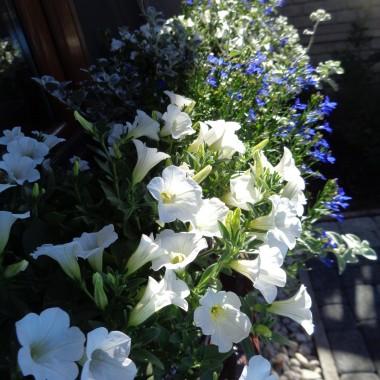 A gdyby tak:...usłyszeć mowę kwiatów (rosnących tak blisko),...poczuć miękki zapach rosy (chłodnego, choć ciągle przymglonego poranka),...zobaczyć cienie wiatru (rozwiewające dookoła setki niepoukładanych myśli).
