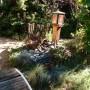 Ogród, Nieśmiała jeszcze jesień - musiałam uciąć jałowca i będzie tu platforma z roślinami zwisającymi