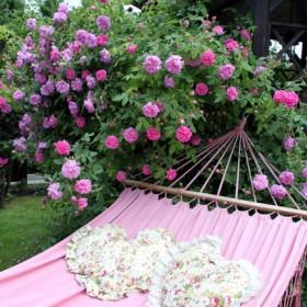 Róże zawładnęły moim ogrodem