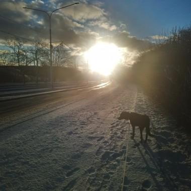 ..............i spacer z psem............