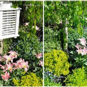 Wiosna okiem tendom.pl, czyli niezwykły ogród Kasi