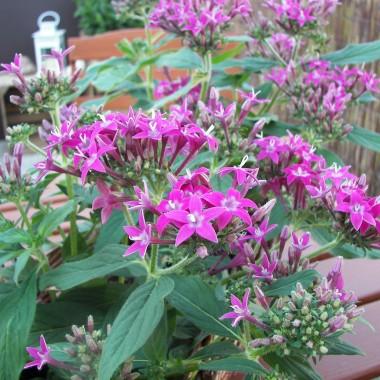 Trochę kwiatków na balkonie :)
