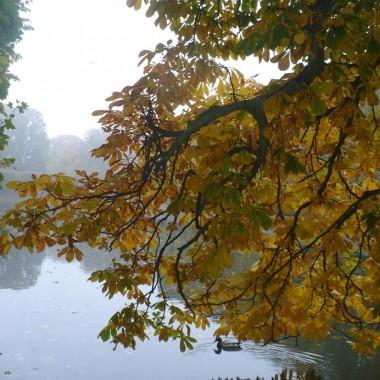 Jesień w Parku Oliwskim..............