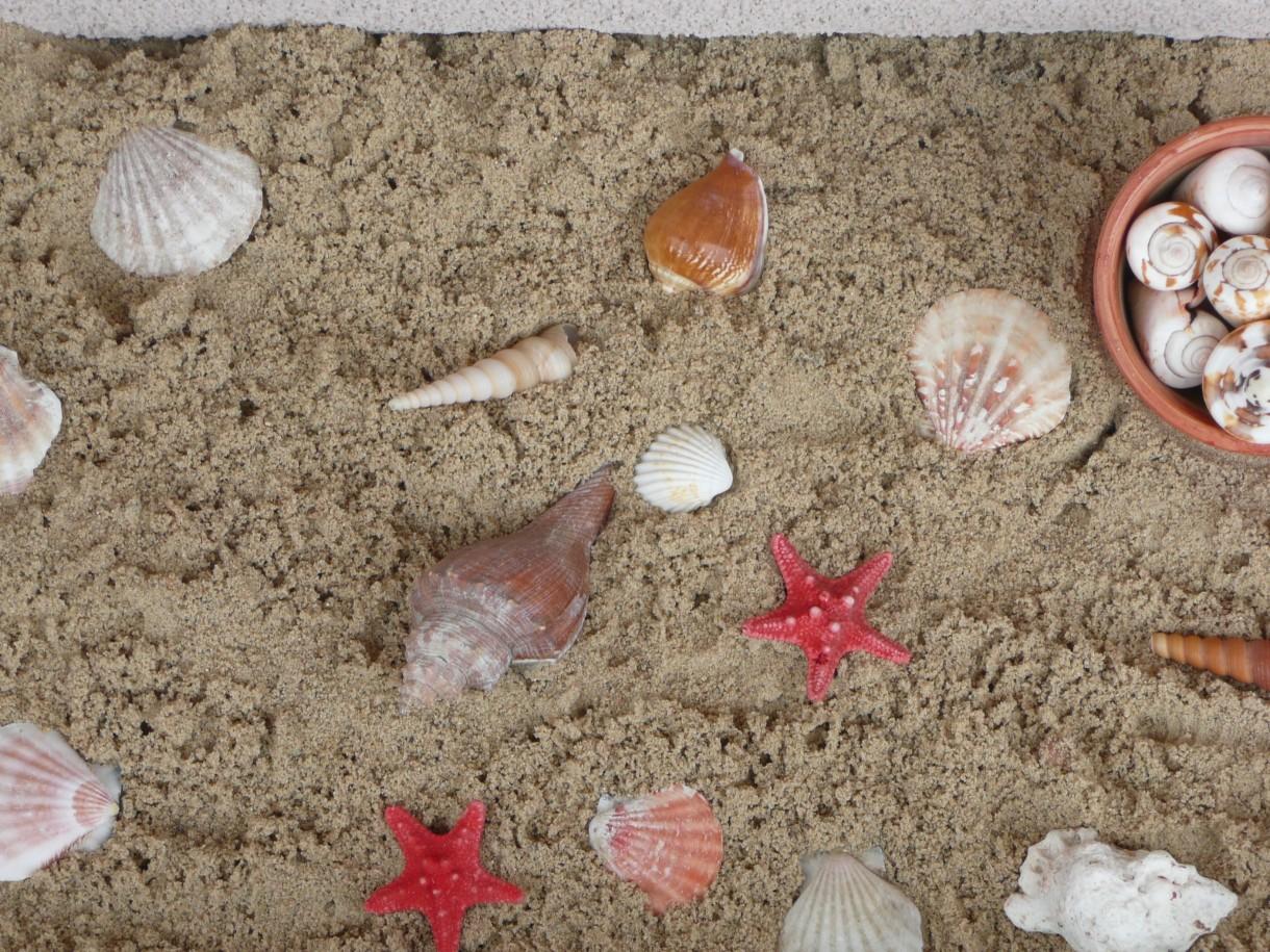 Rośliny, Czerwcowa - ...kawałek mojej plaży