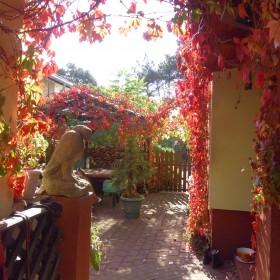 Ogród juz jesienny