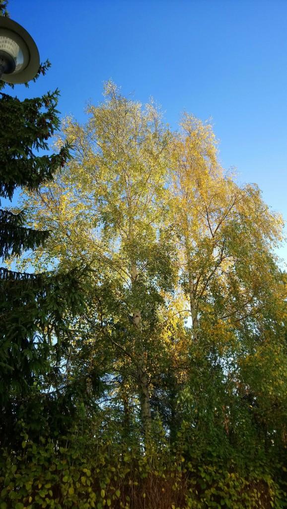 Ogród, Już listopad ............. - ................i zieleń ............i złoto............i błękit.............