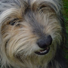mój pies Skuter