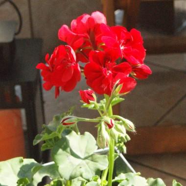Sezon balkonowy uważam za otwarty:)))