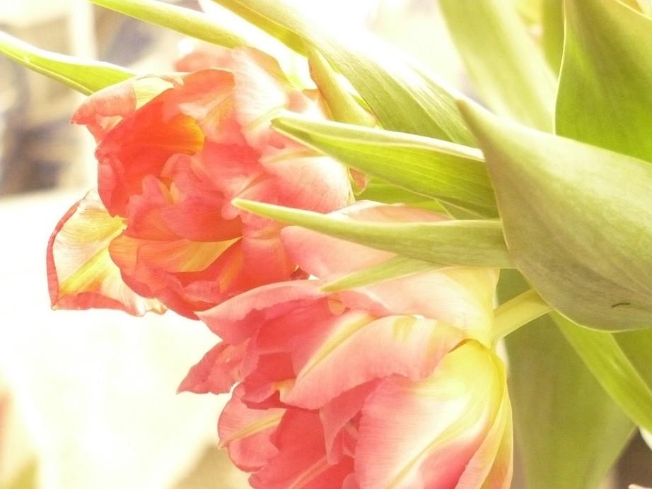 Pozostałe, Lutowa...............zimowa..............z damami.....i panami.. - .................i tulipany...............