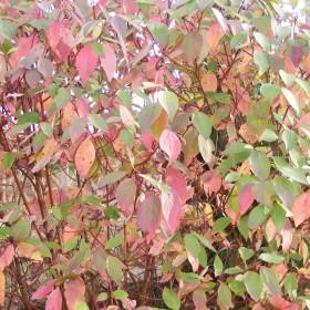 Jesienne barwy w moim ogrodzie