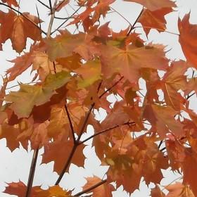 Wczoraj lato, dzisiaj jesień ...........a jesienią ......
