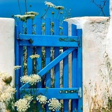 niebieski ogrod