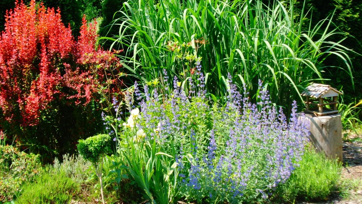 Ogród, kolorowy maj ...
