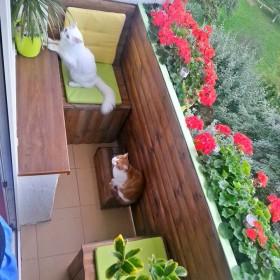 Nasz mały balkon :)