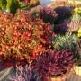 Ogród, Jesień u mnie .