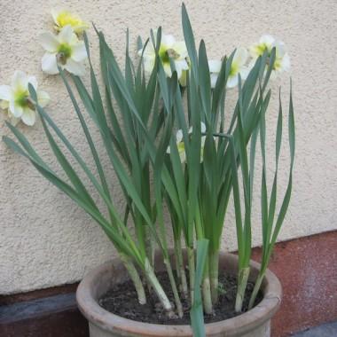 NA  poprawę nastroju  trochę wiosennych kwiatów .Zapraszam do spaceru  po ogrodzie /