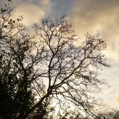 .....................i jesienne drzewa.................