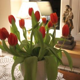 Tulipanowa niedziela :)