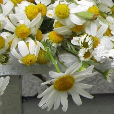 Fotki z mojego ogrodu od wiosny do dziś