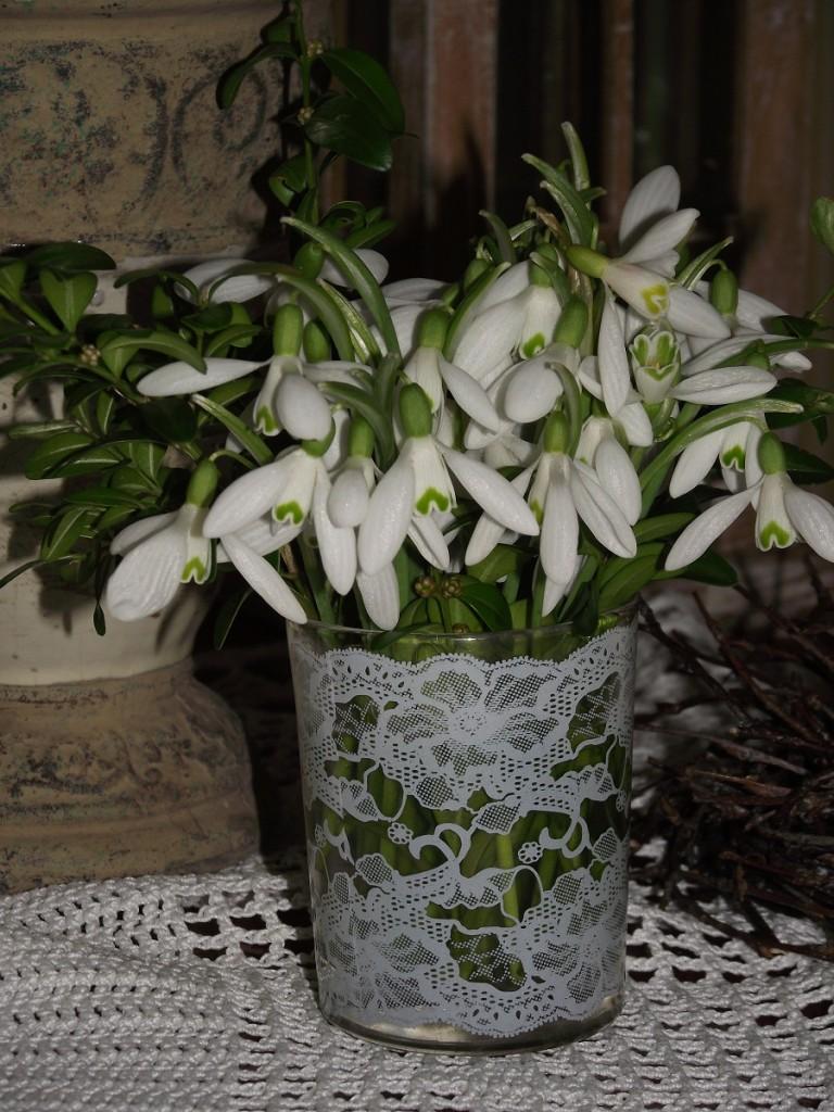 Rośliny, Dziękujemy Wam ... uśmiechem ,wiosną w naszym ogrodzie ....