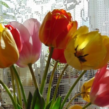 .............i kolorowe tulipany..............