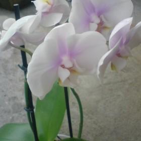 Moja roślinność :) W moim mieszkanku i nie tylko &#x3B;)