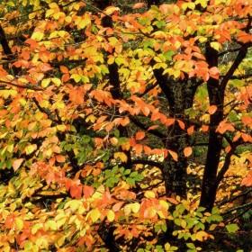 Dary hojnej jesieni .......