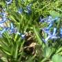 Jadalnia, Przymiarka z zajączkami - :)