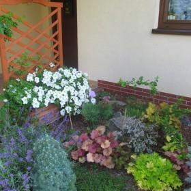 Mój sielski, letni ogród...