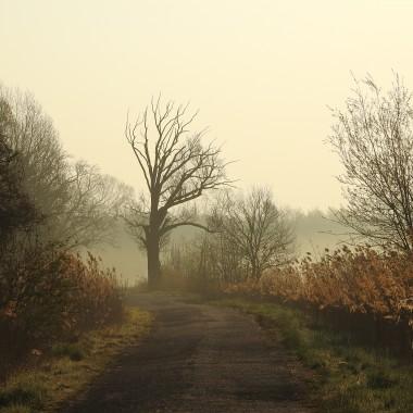 O takiej wyprawie marzyłam od kilku lat.Wyjazd przed wschodem słońca by być na miejscu bladym świtem...widzieć i słyszeć jak budzi się przyroda i wstaje nowy dzień.W dolinie Baryczy poranek jest gwarny.Słychać odgłosy żurawi,dzikich gęsi,leśnej zwierzyny....śpiew ptaków płynie jak melodia....to trzeba usłyszeć...Okolica przepiękna.Liczne stawy ,mokradła,rozlewiska,pola,łąki....raj dla tych co kochają piękno natury i fotografię przyrodniczą...Na mojej liście miejsc do których powrócimy to pozycja nr 1 :)Zapraszam na fotorelację i dziękuję wszystkim odwiedzającym moje aranżacje
