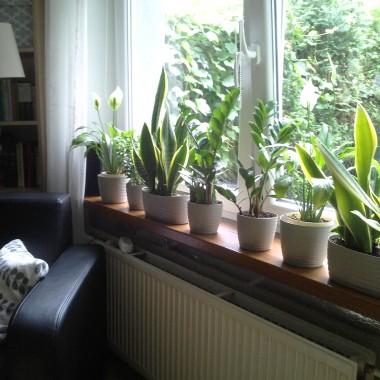 początki w uprawie roślin domowych