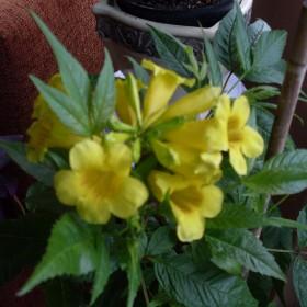 Kwiaty!