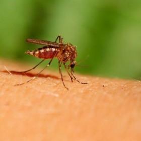 Rośliny, które skutecznie odstraszają komary!