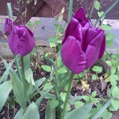 Trochę ogródkowej wiosny :)