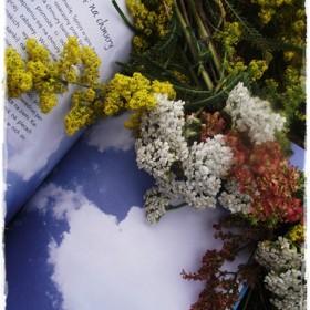 Moje niepoprawne zachwyty pięknością Matki Natury &#x3B;