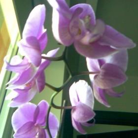 kwiaty, kwiaty,kwiaty