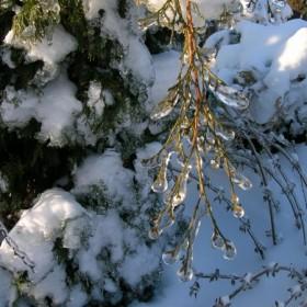 Zima w moim ogrodzie:))