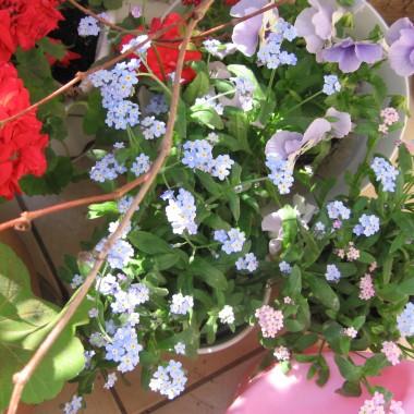 Kwiaty w salonie.