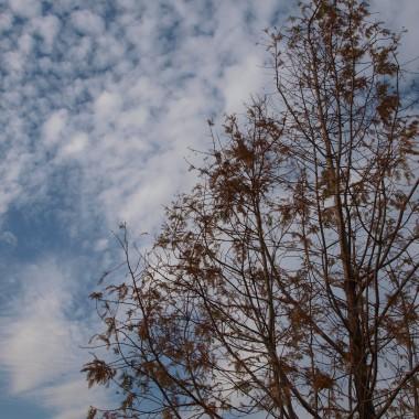 W Ogrodach Kapias jeszcze  kolorowo, kwitną wrzosy, róże, wysokie trawy złocą się w promieniach słonecznych, ostatnie liście powiewają na wietrze, pogodny nastrój udziela się zwiedzającym dzieciom i dorosłym. Zapraszam...