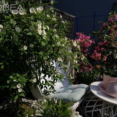 Psianka jaśminowa  (Solanum rantonnetii)