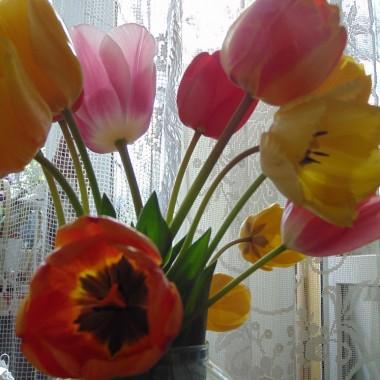 ................i tulipany................
