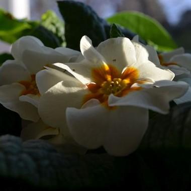 Wystawa kwiatów i ogrodów