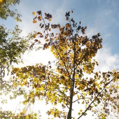 ................i błękitne niebo................