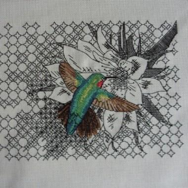 Brzęczący Koliberek