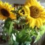 Rośliny, Jesienna galeria ...............z bombkami..... - ................i słoneczniki................